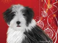 No. 47  Christmas card-red background  Available for purchase as card or other items.  I can draw your DOG for you too!  black Beardie youngster.  Great Christmas card!